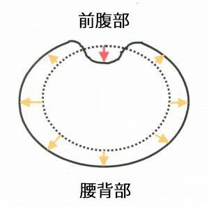 腹部断面図